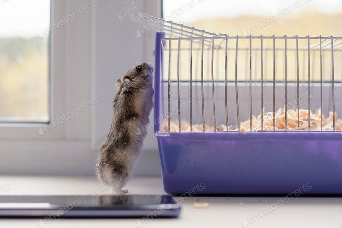 the hamster looks in the cage