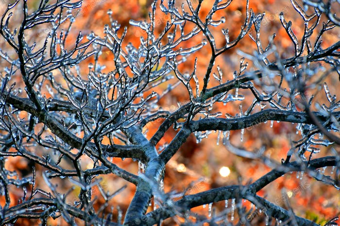 Ice accumulation after sleet and freezing rain covers the area in an early winter, late fall storm.