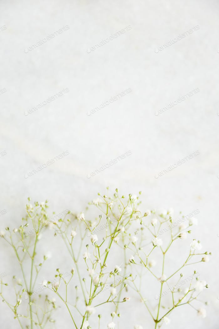 Baby's breath on a marble tabletop