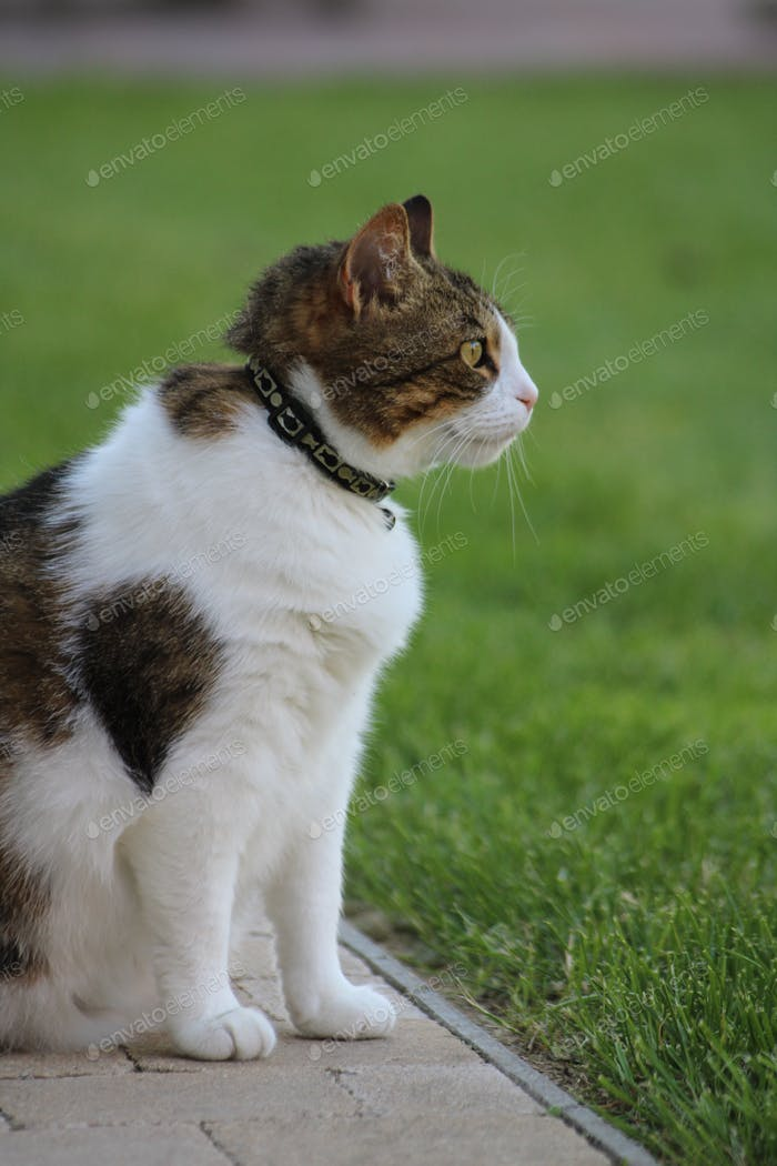Retrato de un gran gato mirando hacia el jardín