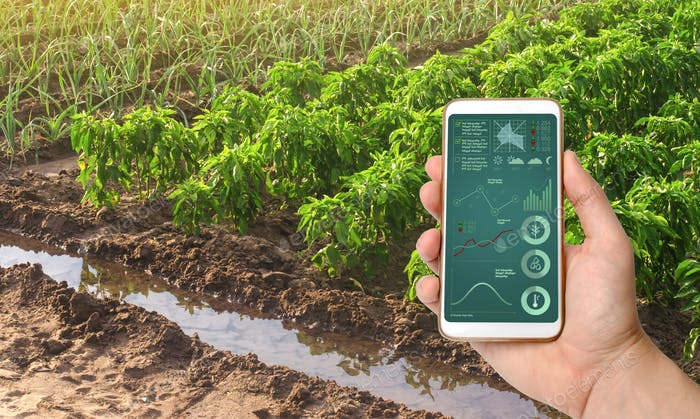 A smartphone with infographics on the background of bell pepper and leek onions plantations