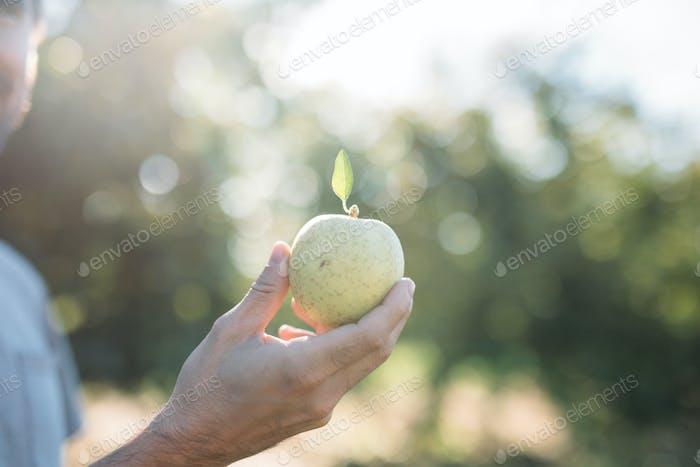 Einzelner Apfel.
