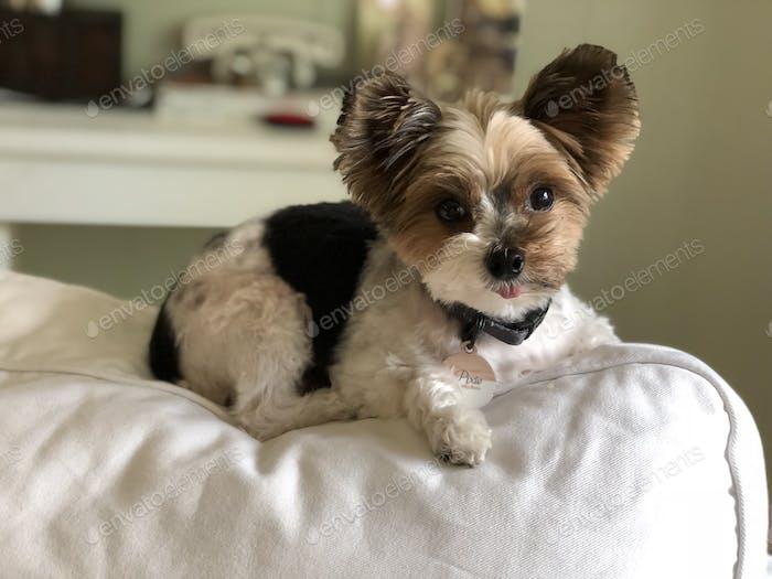 Cute fluffy dog