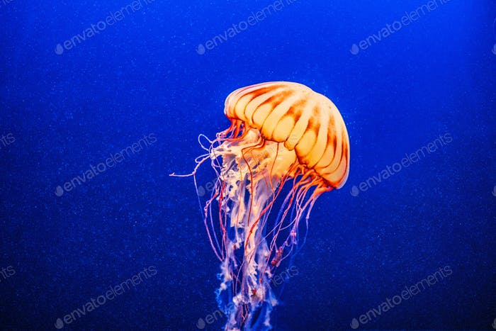 Jelly fish captured! Very beatiful creature from the ocean