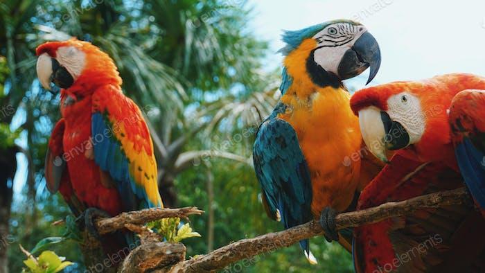 Parrots in the Amazon rainforest