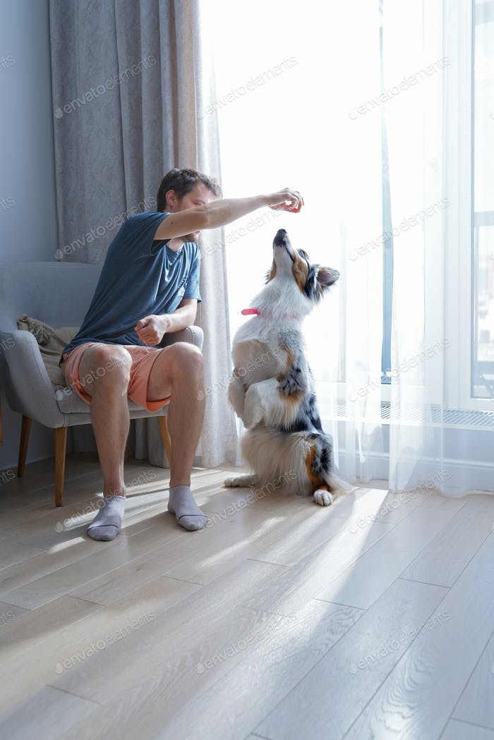 millennial man training and playing with his furry friend Australian Shepherd Aussie. Perfect pets