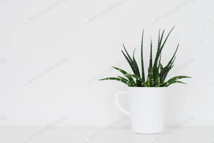White simplicity, interior plant decoration, minimalism, negative space.