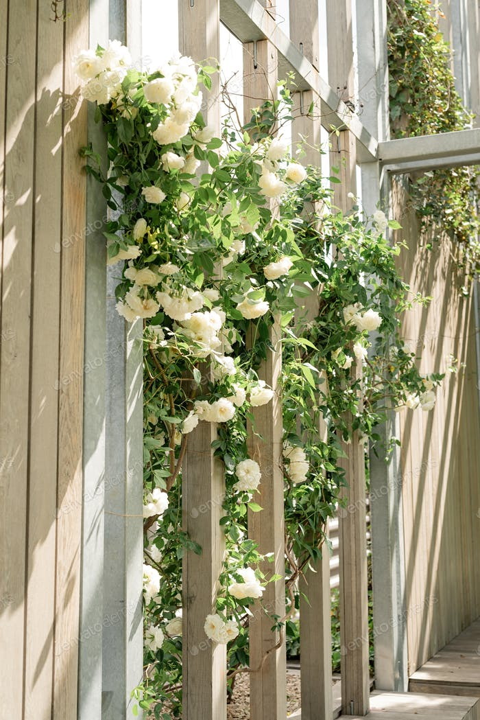 Beautiful white roses on the  park wall. light and shadows pattern