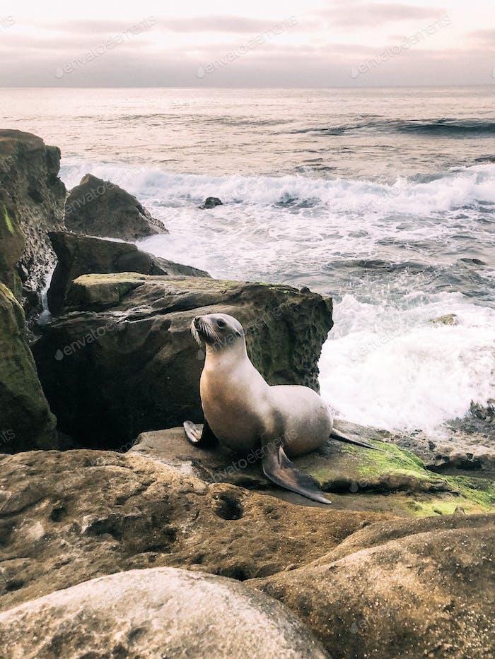 Friendly Seal
