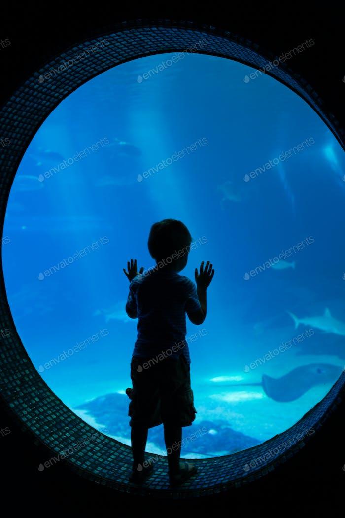 Junge im Aquarium