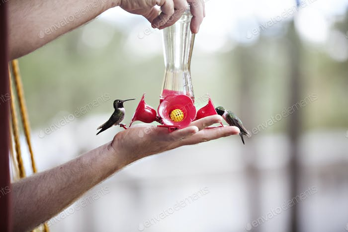 Humming birds at feeding time.