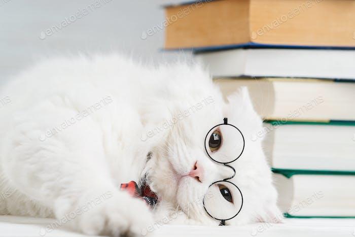 Portrait of furry cat in transparent round glasses