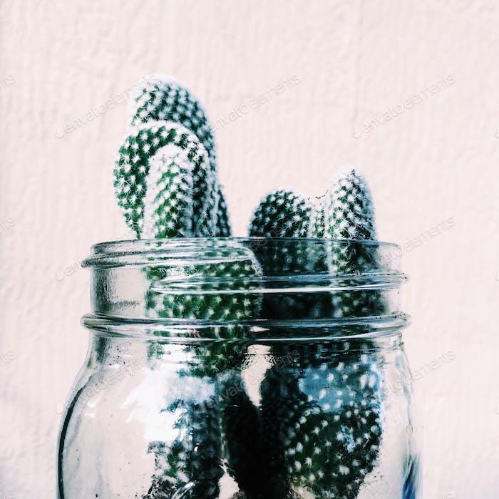 Karl the cactus