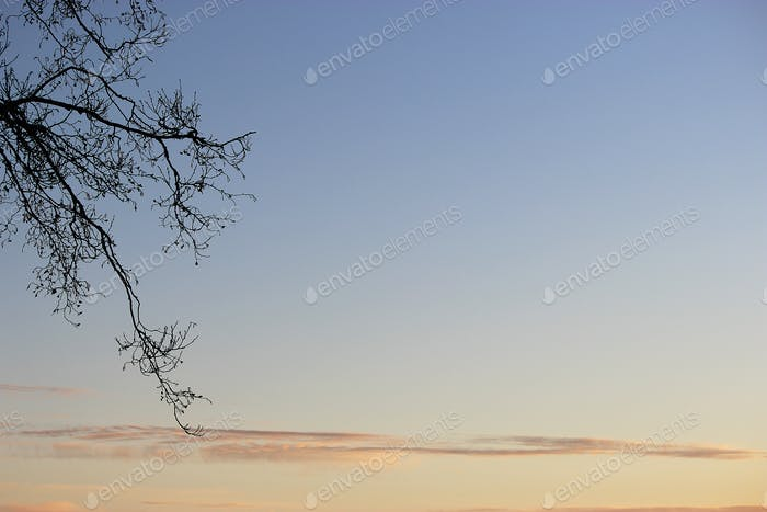 Tranquil scene of sunset sky and branches of the tree.