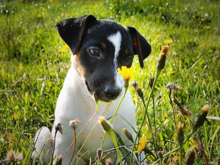 Cute little pup