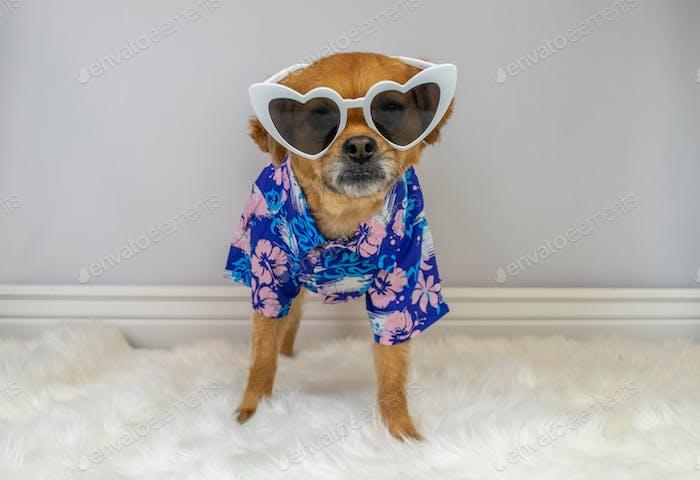 Cute dog wearing blue and purple Hawaiian Aloha shirt and sunglasses