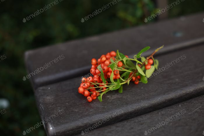 Ashberry on a bench