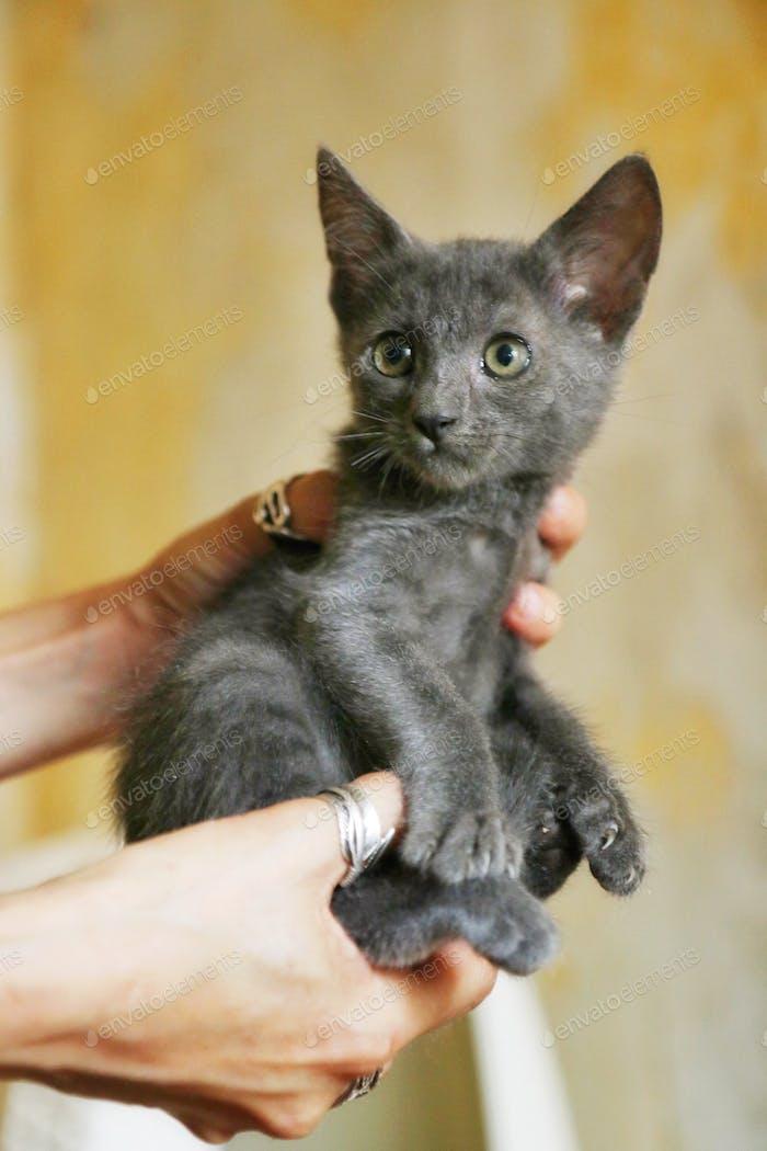Cute grey kitty