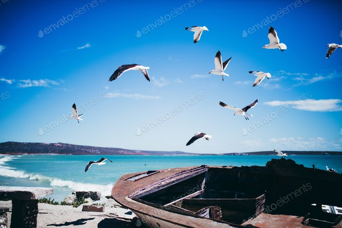 Seagulls flying over old shipwreck on the beach
