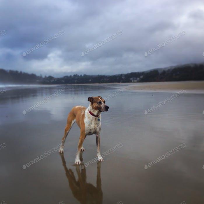 Phoebe am Strand von Agate