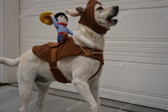 Dog in a rodeo bull costume