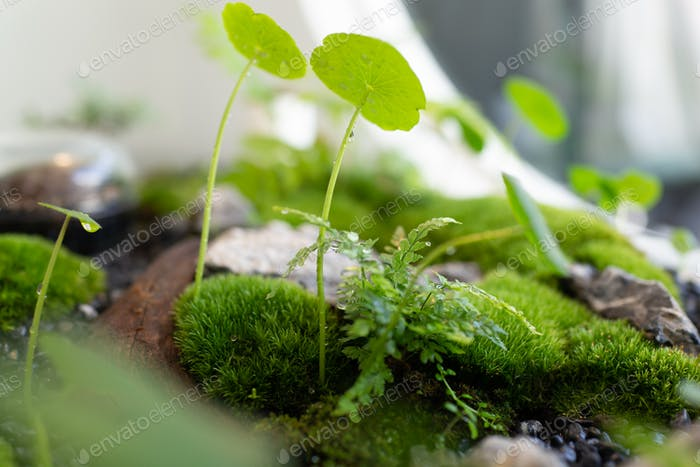 Close up small garden of terrarium bottle