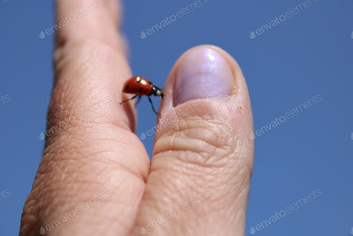 Minimalism , ladybug crossing over from finger to finger