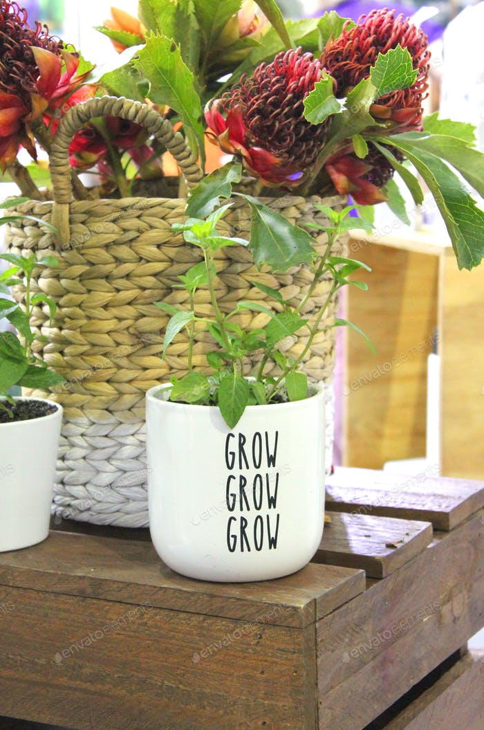 Plant in a pot that says Grow grow grow