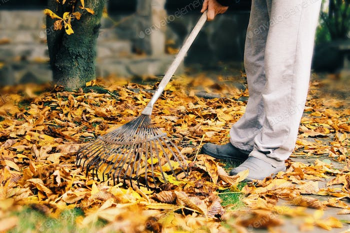 The man cleans dry leaves in a garden