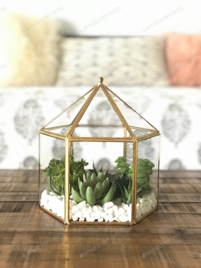 Terrarium of succulents on a wooden coffee table