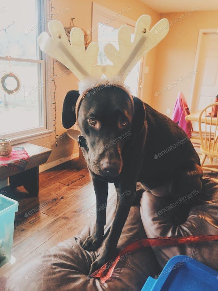 Doggy decorating