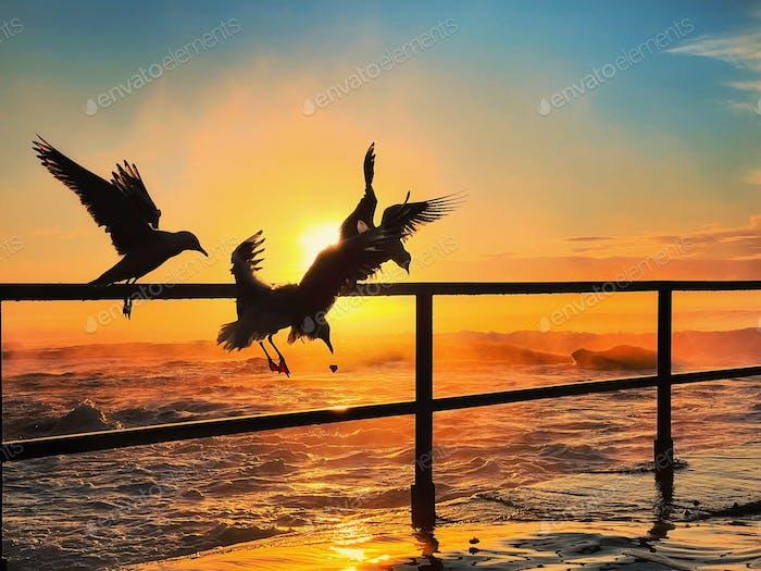 Sunrise and seagull silhouette