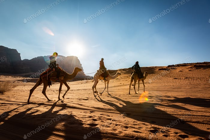 Camel in the desert, Jordan