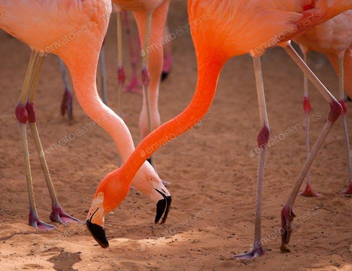 *NOMINATED ON NOV 14* Flamingos, birdwatching