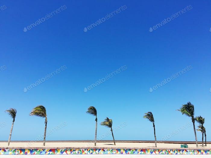 Brazilian Beach - Fortaleza
