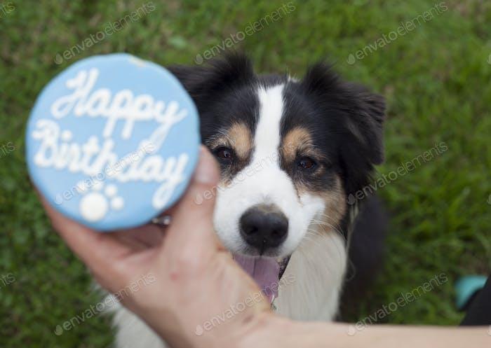 Birthday pup!