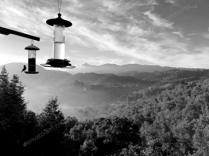 Bird feeders with view