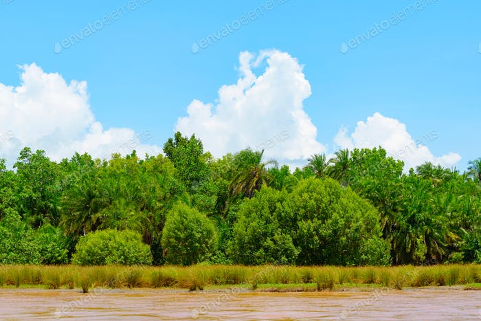 mangrove forest, african river Wami with orange water and picturesque clouds