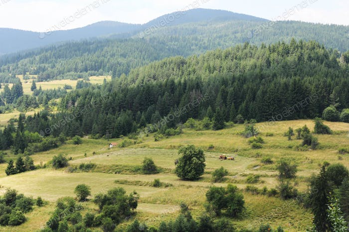 Rhodope mountains in Bulgaria, landscape, mountain, conifers