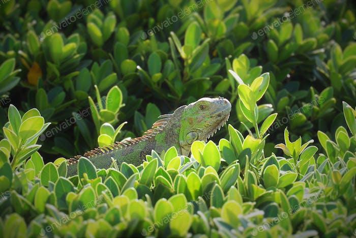 Captured in Sint Maarten.