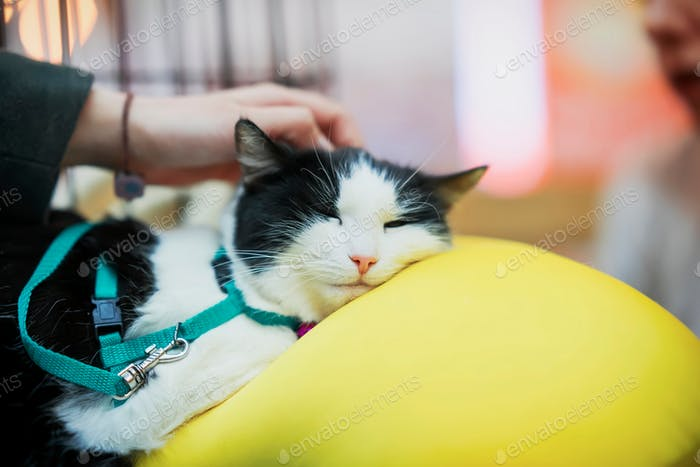 ☀ NOMINATED!!! ☀ Sad cat lying on big yellow pillow in cage waiting for treatment of veterinary