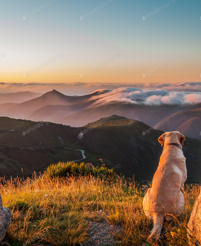 Dog watching the sunset in the mountains