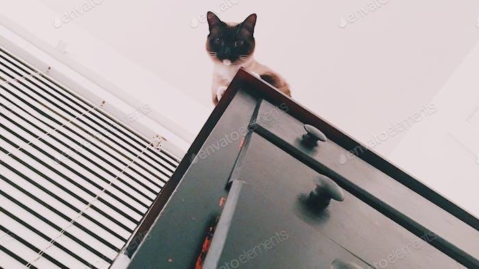 Un adorable gato se asoma desde la parte superior de un tocador.