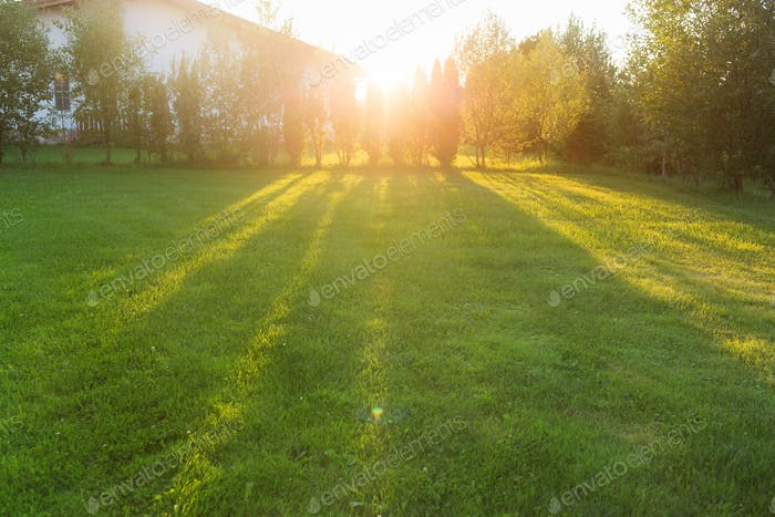 Front or Back Yard of House. background of grass lawn in spring or summer. green thuja hedge.