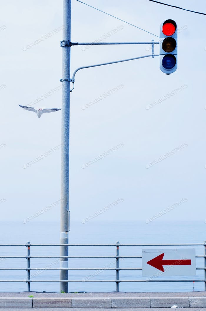 Seagull flying past traffic light by the Japan sea.