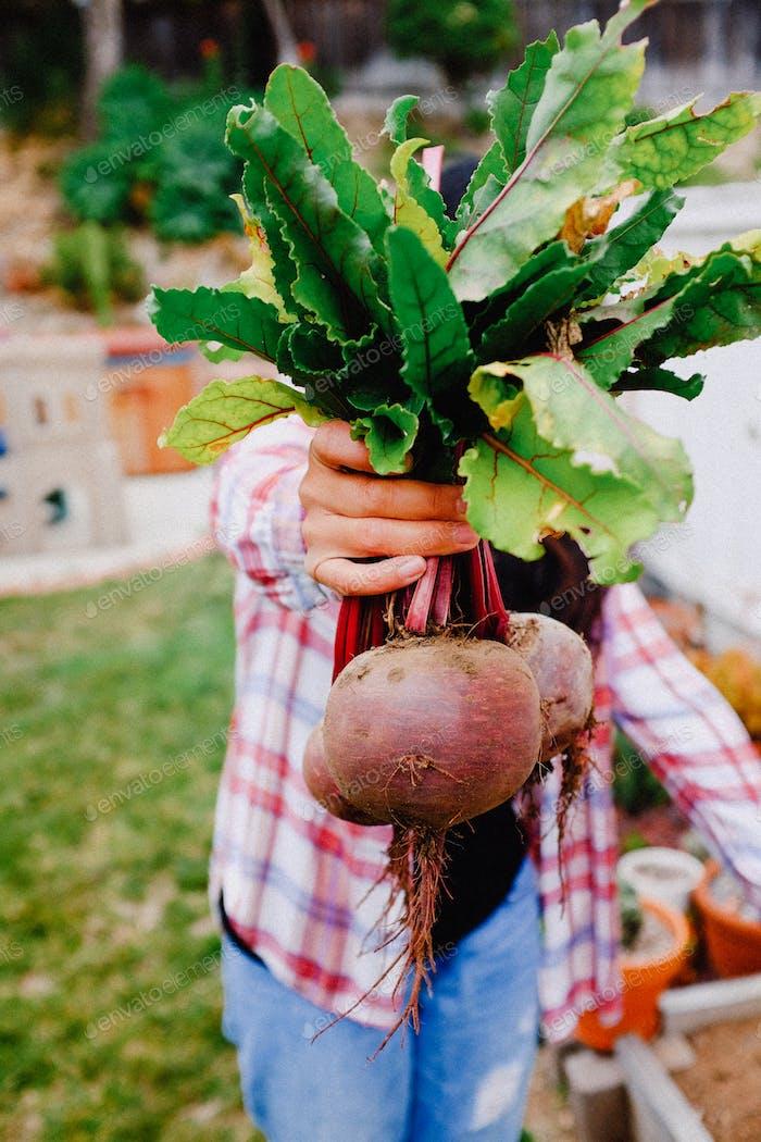 Frische selbst angebaute Bio-Produkte Kompost Nährstoff Gemüsegarten gesunde Lebensmittel.