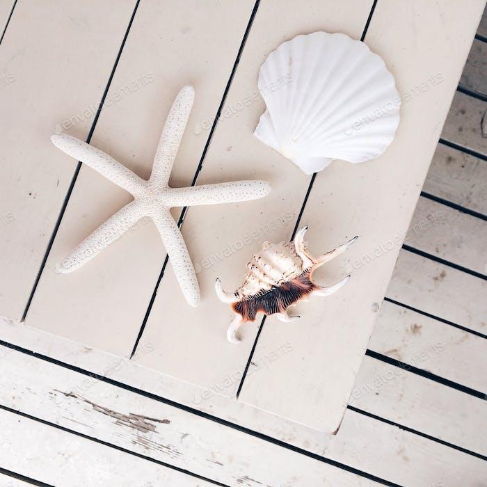 muscheln und stern weißen schäbigen hintergrund von holzbrettern sommer meer strand urlaub urlaub iphon