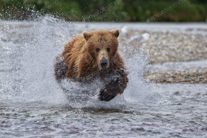 Running Grizzly