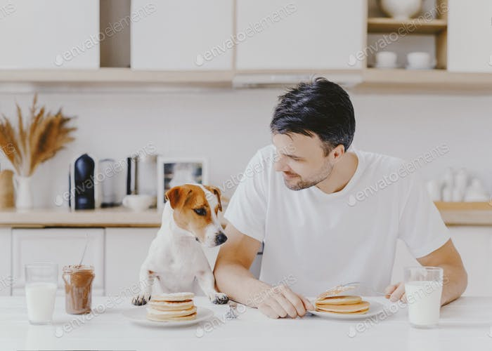 Unshaven European man spends free time together with pedigree dog, eat pancakes in kitchen