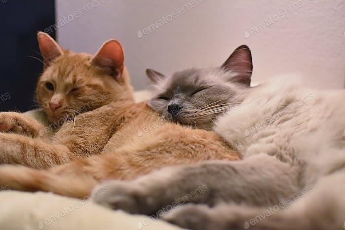 Cuddle buddies, cats.
